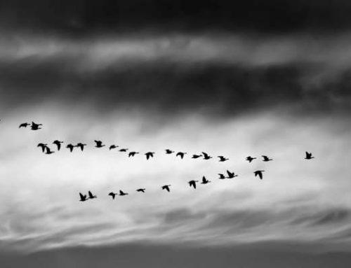 تصمیم گیری برای مهاجرت: بروم یا بمانم؟
